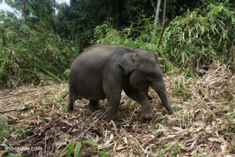 sumatra_9280