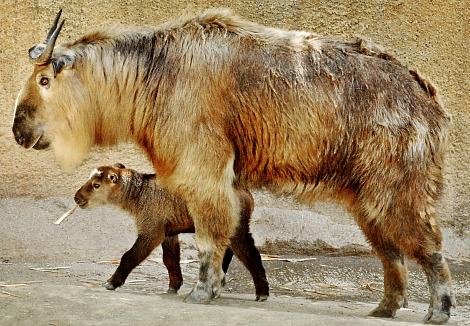 Photo from Zoo Borns