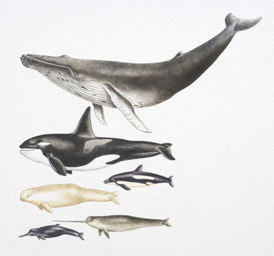 narwhalwhales