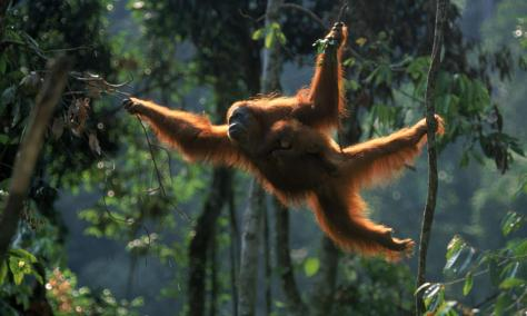 Photo from WWF
