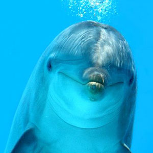 Photo from Dolphin World