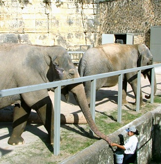 This photo is from the San Antonio Zoo, the ONLY U.S. Zoo to make it to the list of top 10 worst zoos in the world.
