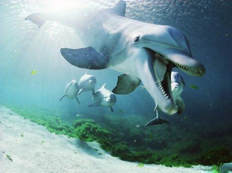 Dolphin-Underwater-Best-Wallpaper-HD-3