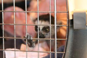 Photo from my own collection I took at an exotic animal breeder