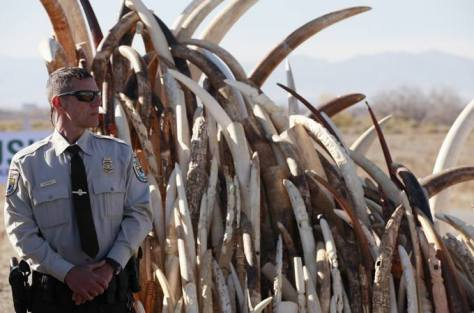 Confiscated ivory to be destroyed
