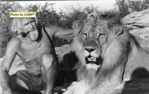 Photo from A Lion Called Christian of George Adamson with Christian in 1973. Photo by GAWPT