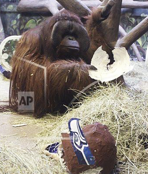 Photo from the Associated Press/Hogle Zoo
