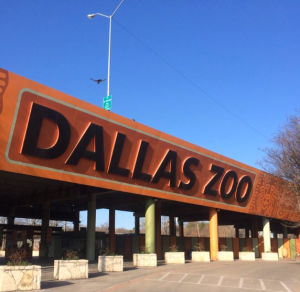 Dallas Zoo, photo by me