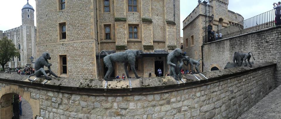 Lions At The Tower Of London Endangered Living