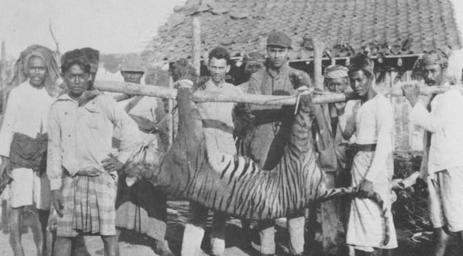 The Bali Tiger