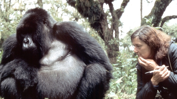 Happy Birthday Dian Fossey