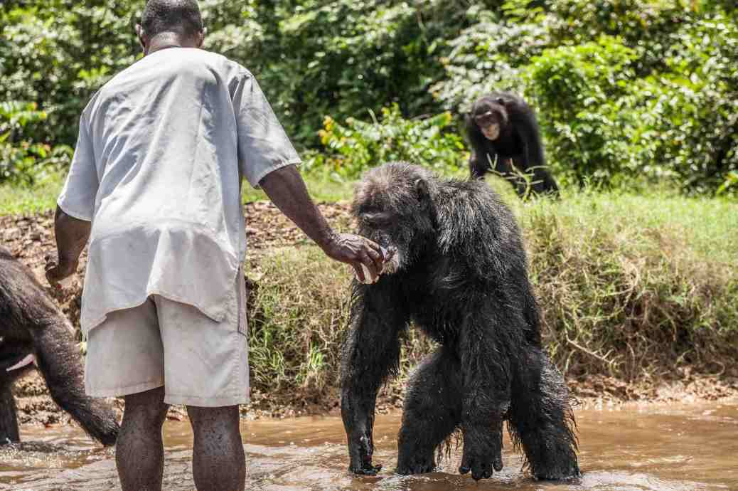 chimps-liberia-jeff-topham